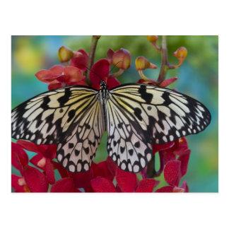 Sammamish, Washington. Mariposas tropicales 63 Tarjeta Postal