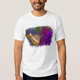 Sammamish, Washington. Mariposas tropicales 64 Camisas