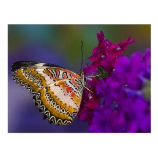 Sammamish, Washington. Mariposas tropicales 64 Postal