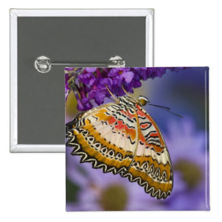 Sammamish, Washington. Mariposas tropicales 65 Pin Cuadrada 5 Cm