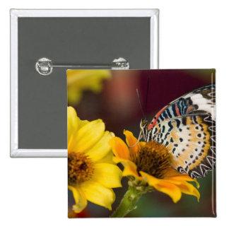 Sammamish, Washington. Mariposas tropicales 66 Pin Cuadrada 5 Cm