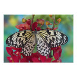 Sammamish, Washington. Mariposas tropicales 67 Fotografía