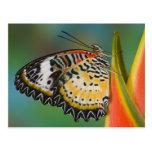 Sammamish, Washington. Mariposas tropicales 67 Postales