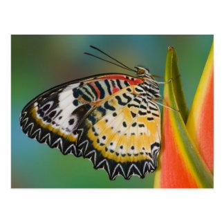 Sammamish, Washington. Mariposas tropicales 67 Tarjetas Postales