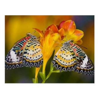 Sammamish Washington Mariposas tropicales 68 Postal