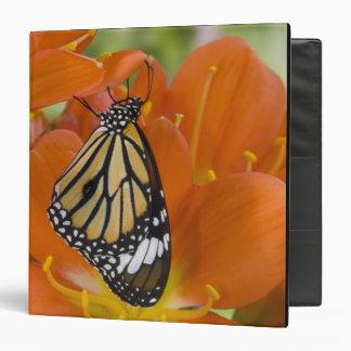 "Sammamish, Washington. Mariposas tropicales 69 Carpeta 1 1/2"""