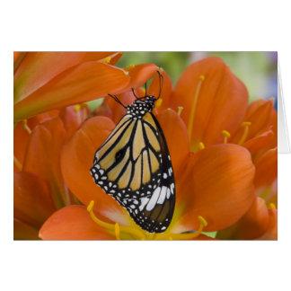 Sammamish, Washington. Mariposas tropicales 69 Tarjeta De Felicitación