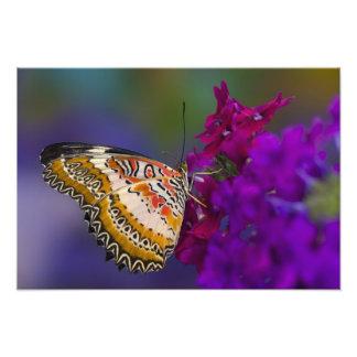 Sammamish, Washington. Mariposas tropicales 6 Impresión Fotográfica