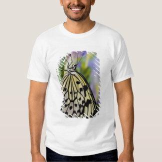Sammamish, Washington. Mariposas tropicales 6 Playeras
