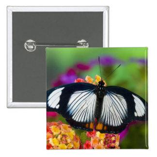 Sammamish, Washington. Mariposas tropicales 70 Pins