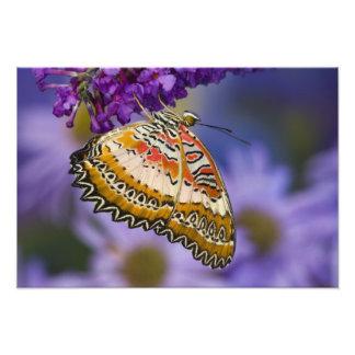 Sammamish, Washington. Mariposas tropicales 7 Impresión Fotográfica