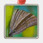 Sammamish, Washington. Mariposas tropicales 8 Ornamento Para Reyes Magos