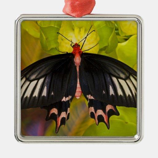 Sammamish, Washington. Mariposas tropicales 9 Adornos