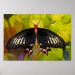 Sammamish, Washington. Mariposas tropicales 9 Impresiones