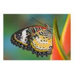 Sammamish, Washington. Mariposas tropicales 9 Impresiones Fotograficas
