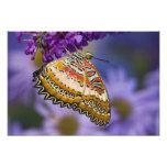Sammamish, Washington. Mariposas tropicales 9 Fotografía
