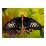 Sammamish, Washington. Mariposas tropicales 9 Tarjeton