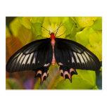 Sammamish, Washington. Mariposas tropicales 9 Tarjetas Postales