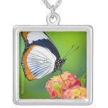 Sammamish, Washington. Mariposas tropicales Colgante Cuadrado