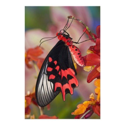 Sammamish, Washington. Mariposas tropicales Fotografías