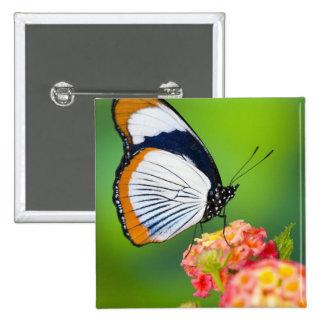 Sammamish, Washington. Mariposas tropicales Pin Cuadrada 5 Cm