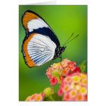 Sammamish, Washington. Mariposas tropicales Tarjeta De Felicitación