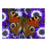 Sammamish Washington Photograph of Butterfly 10 Greeting Card