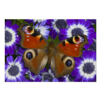Sammamish Washington Photograph of Butterfly 10 Poster