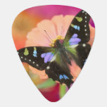 Sammamish Washington Photograph of Butterfly 11 Guitar Pick
