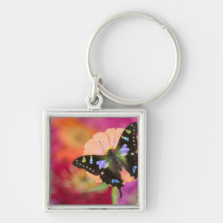 Sammamish Washington Photograph of Butterfly 11 Key Chains