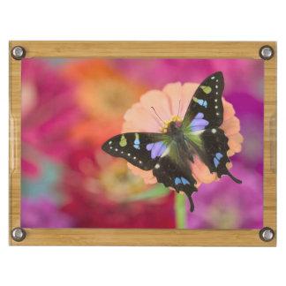 Sammamish Washington Photograph of Butterfly 11 Rectangular Cheese Board