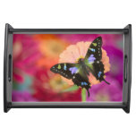 Sammamish Washington Photograph of Butterfly 11 Serving Tray