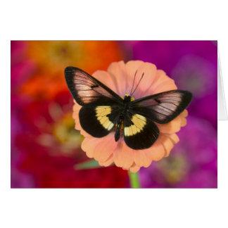 Sammamish Washington Photograph of Butterfly 12 Greeting Card