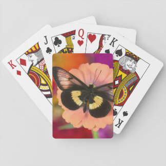 Sammamish Washington Photograph of Butterfly 12 Playing Cards