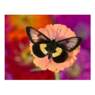 Sammamish Washington Photograph of Butterfly 12 Post Card
