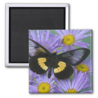 Sammamish Washington Photograph of Butterfly 13 2 Inch Square Magnet