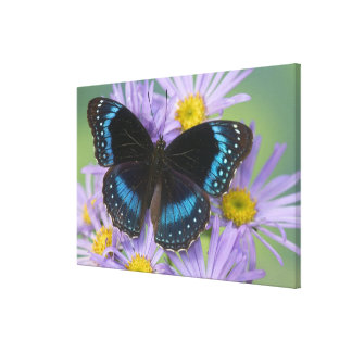 Sammamish Washington Photograph of Butterfly 13 Canvas Print