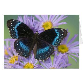 Sammamish Washington Photograph of Butterfly 14 Card