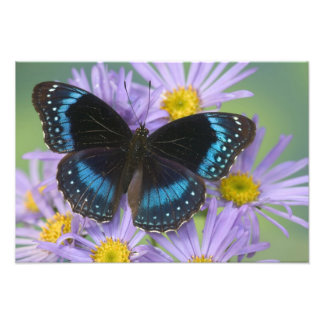 Sammamish Washington Photograph of Butterfly 14