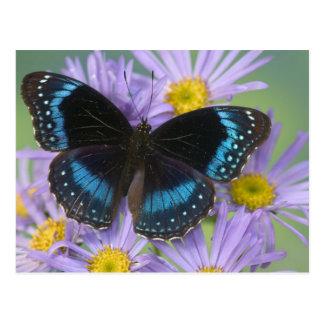 Sammamish Washington Photograph of Butterfly 14 Postcard