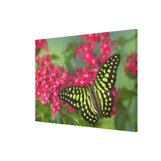 Sammamish Washington Photograph of Butterfly 15 Stretched Canvas Print
