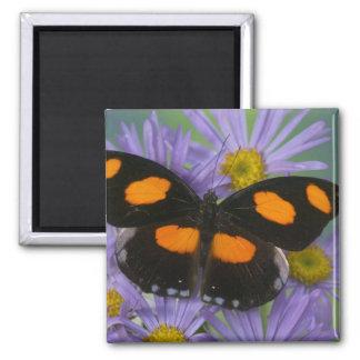 Sammamish Washington Photograph of Butterfly 15 Refrigerator Magnets