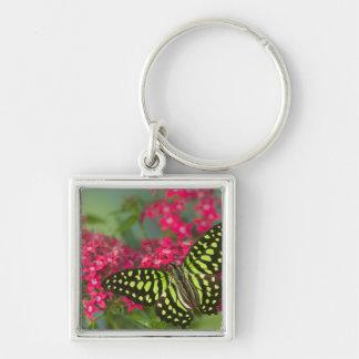 Sammamish Washington Photograph of Butterfly 16 Keychain