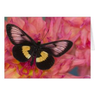 Sammamish Washington Photograph of Butterfly 17 Card