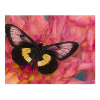 Sammamish Washington Photograph of Butterfly 17 Postcard