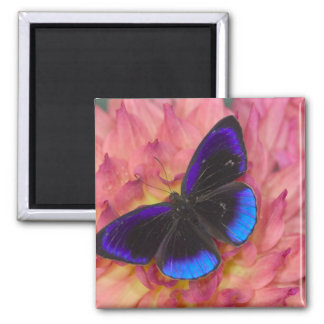 Sammamish Washington Photograph of Butterfly 18 Magnet
