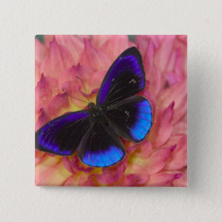 Sammamish Washington Photograph of Butterfly 18 Pinback Button
