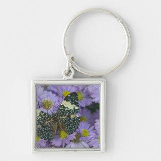 Sammamish Washington Photograph of Butterfly 19 Keychain