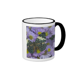 Sammamish Washington Photograph of Butterfly 19 Coffee Mug