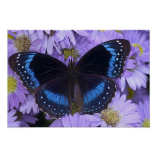 Sammamish Washington Photograph of Butterfly 19 Posters